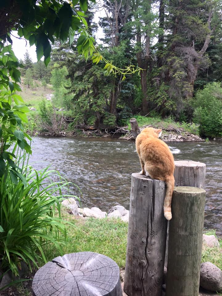 A curious orange cat sits on wooden posts overlooking the flowing river