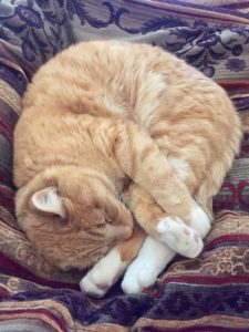 orange tabby cat curled up sleeping