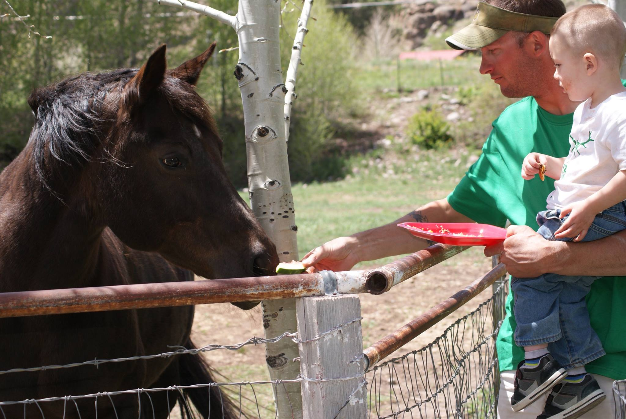 A man in a green shirt, holding his son, shares some food with the dark brown horse