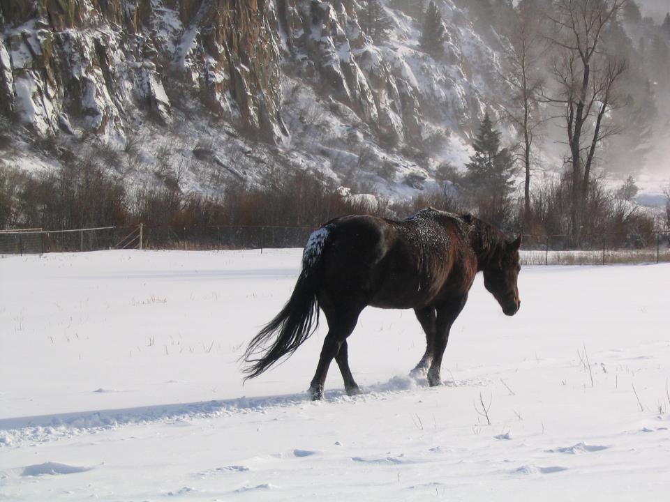 A dark brown horse trods through a blanket of snow with the frosted trres and cliffs in the distance