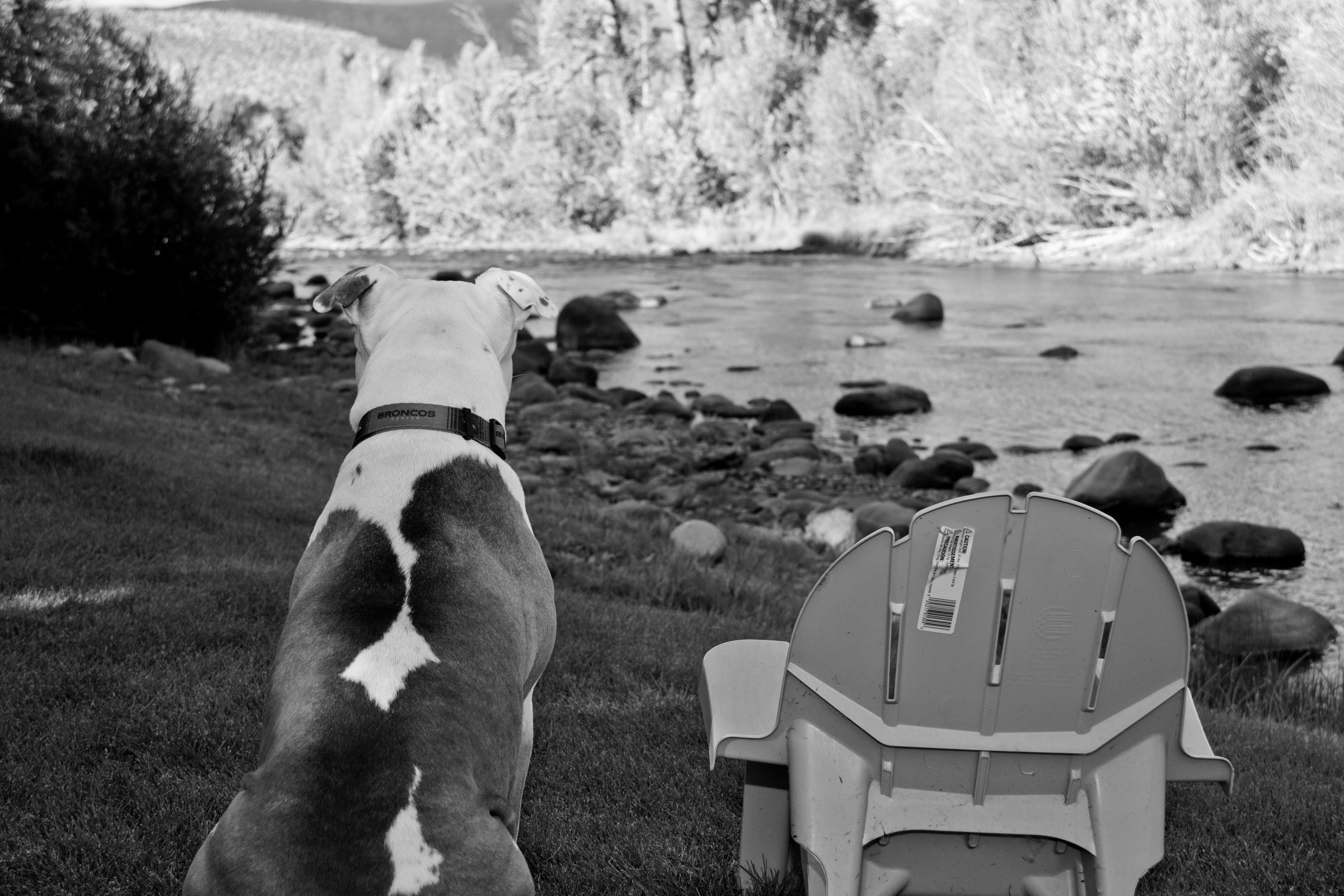 a dog stands stoicly next to an empty chair, overlooking the rocky riverbank ahead